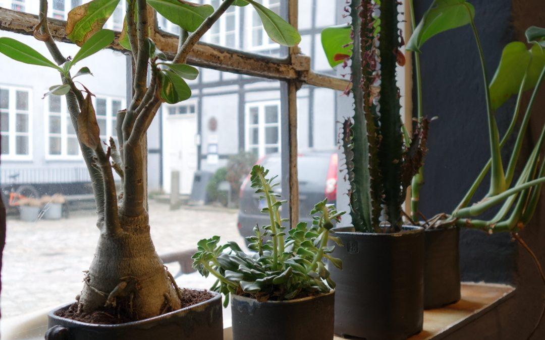 Grønne planter i Lab48c i Mejlgade i Aarhus